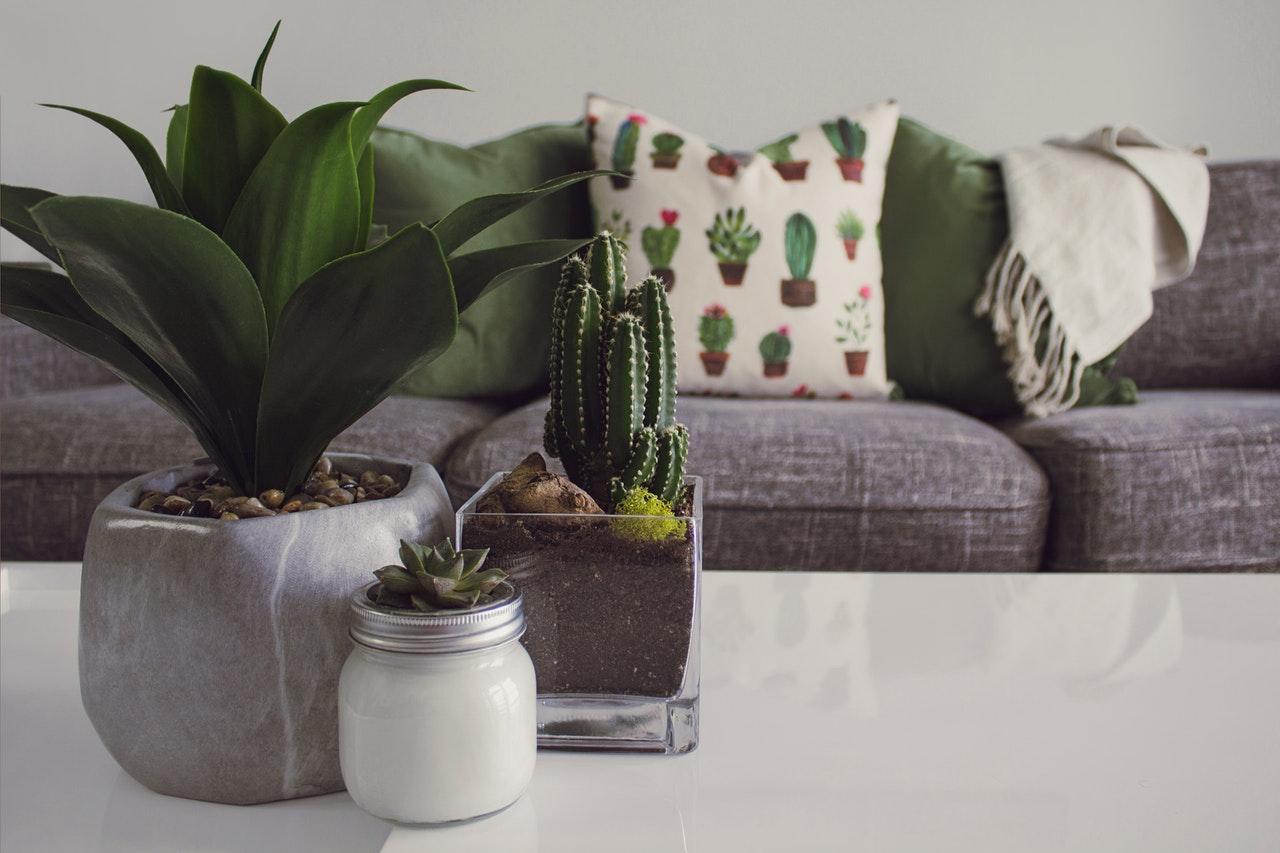 Flot indrettet stue med kaktusser på sofabord